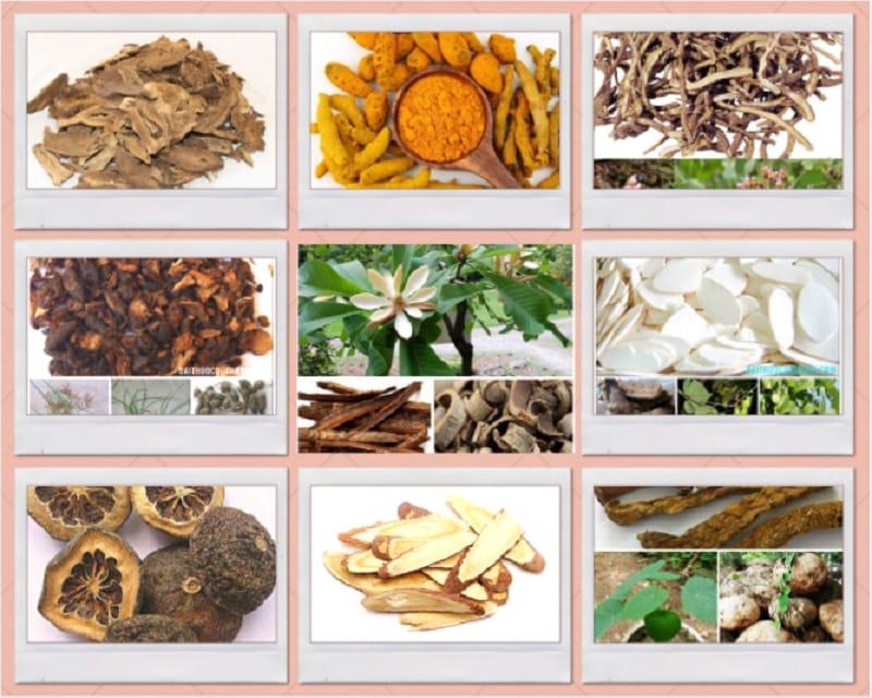 Stomach Reflux gồm 9 vị dược liệu
